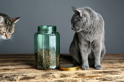 Gatos y Cat Food en vidrio Imagenes de archivo