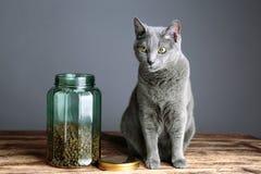 Gatos y Cat Food en vidrio Imagen de archivo libre de regalías