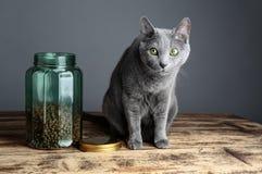 Gatos y Cat Food en vidrio Fotos de archivo libres de regalías