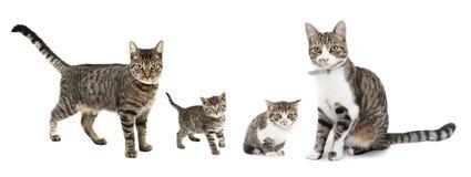 Gatos y gatitos Foto de archivo libre de regalías