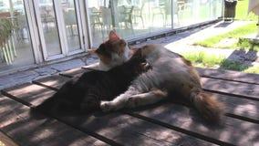 Gatos y gatitos en el jardín metrajes