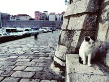 Gatos y mar Imagenes de archivo