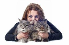 Gatos y mujer de coon de Maine fotografía de archivo