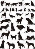 Gatos y perros Imagen de archivo libre de regalías