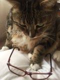 Gatos y vidrios   Tabby Cat masculina diabética mayor fotografía de archivo