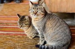 gatti Fotografia Stock