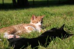 Gatti fotografie stock libere da diritti