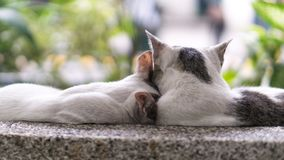 Gatti adorabili delle coppie fotografia stock libera da diritti