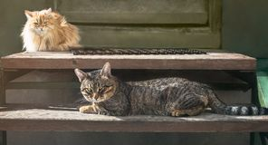 Gatti arrabbiati Fotografia Stock