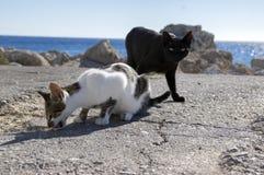 Gatti in bianco e nero di Rodi, gatti che mangiano sulla costa in città, mare su fondo fotografie stock libere da diritti