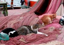 Gatti che dormono sulle reti da pesca Fotografia Stock Libera da Diritti