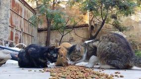 Gatti che mangiano gatto asciutto Foodin un cortile di una casa abbandonata stock footage