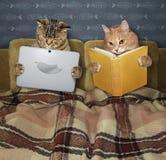 Gatti che riposano a letto immagini stock libere da diritti