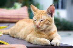 Gatti che si rilassano vacanza Immagini Stock