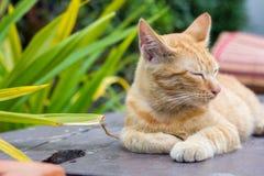 Gatti che si rilassano vacanza Fotografia Stock