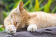Gatti che si rilassano vacanza Fotografie Stock