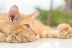 Gatti che si rilassano vacanza Fotografia Stock Libera da Diritti