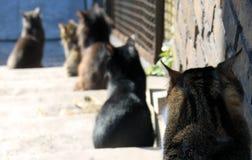 Gatti che si siedono nella linea Immagine Stock