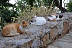 Gatti che si siedono su una parete di pietra in Grecia Fotografia Stock
