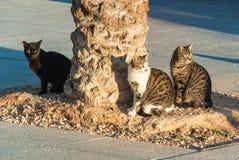 Gatti che si siedono sulla via Fotografia Stock