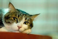 Gatti che vi guardano Fotografie Stock