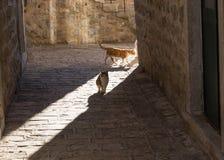 Gatti in Città Vecchia in Budua Fotografie Stock Libere da Diritti