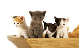 Gatti curiosi Fotografie Stock Libere da Diritti