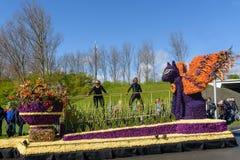 Gatti dei fiori Festa dei colori stupefacenti e dei sapori deliziosi Evento famoso Foto di viaggio Fotografie Stock