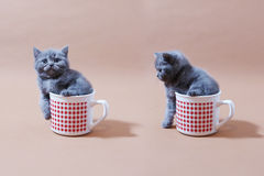Gatti del bambino Fotografie Stock
