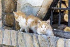 Gatti del bambino Fotografia Stock Libera da Diritti