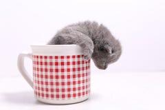 Gatti del bambino in una tazza Fotografia Stock Libera da Diritti
