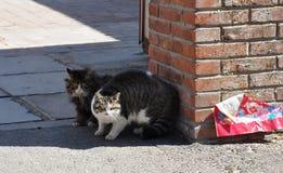 Gatti dell'animale domestico in Cina del nord rurale Fotografie Stock