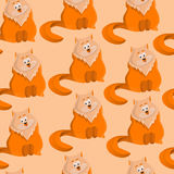 Gatti dell'arancia del modello Fotografia Stock