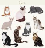Gatti della razza di vettore nelle pose differenti Animali domestici altamente dettagliati del fumetto illustrazione vettoriale