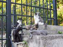 Gatti della via Fotografie Stock Libere da Diritti