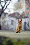 Gatti della via Gruppi di gatti della via Immagine Stock Libera da Diritti