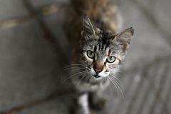 Gatti della via Gruppi di gatti della via Fotografie Stock Libere da Diritti
