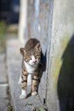 Gatti della via Gruppi di gatti della via Fotografie Stock