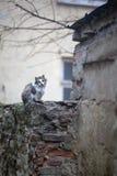 Gatti della via Gruppi di gatti della via Immagine Stock