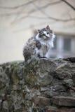 Gatti della via Gruppi di gatti della via Fotografia Stock
