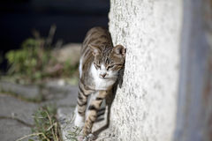 Gatti della via Gruppi di gatti della via Fotografia Stock Libera da Diritti