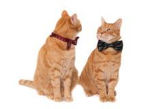 Gatti dello zenzero con gli archi del legame immagini stock