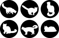Gatti di marchio Immagine Stock Libera da Diritti