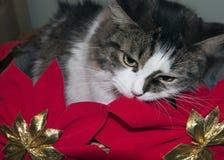 Gatti di X'mas Fotografie Stock