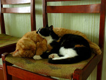 Gatti di sonno Immagini Stock Libere da Diritti
