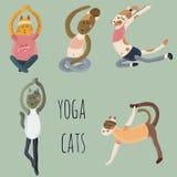 Gatti di yoga fotografia stock