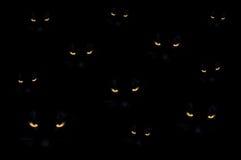 Gatti diabolici Fotografia Stock Libera da Diritti