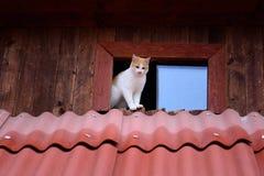 Gatti divertenti fotografia stock
