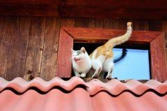 Gatti divertenti fotografie stock libere da diritti