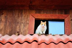 Gatti divertenti fotografia stock libera da diritti